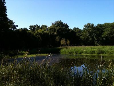2011-08-11 Egrets