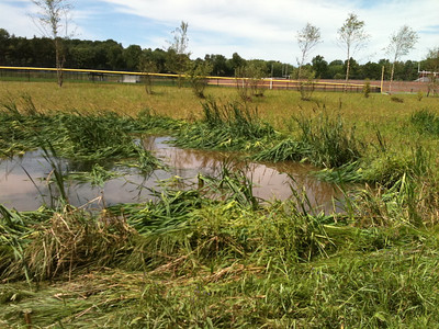 2011-08-29 Flood Damage & heron