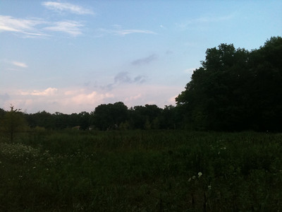 2012-07-23 Meadow & Wildflowers