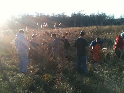 2012-11-29 Hockey team weeds Cattails