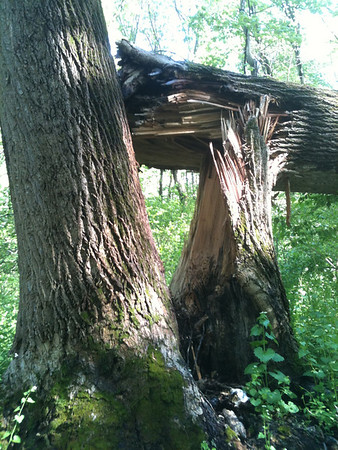 2013-05-09 Meadow & Sisters Woods