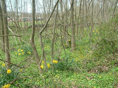 2011-04-14 Riparian Woods