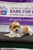 Bark4LifeWeb-6805