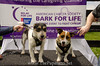 Bark4LifeWeb-6796