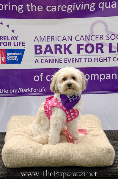 Bark4LifeWeb-6929