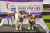 Bark4LifeWeb-6798