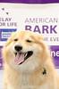 Bark4LifeWeb-6880