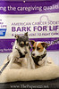 Bark4LifeWeb-6852