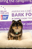 Bark4LifeWeb-6764