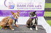Bark4LifeWeb-6813