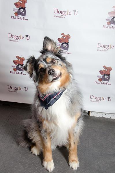 LR-DoggieU2013-1022