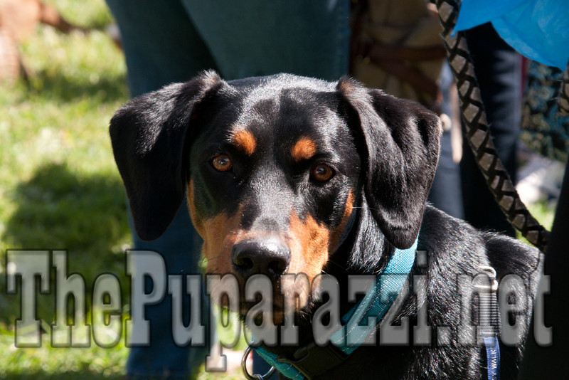 CanineClassic2010-02741