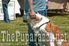 CanineClassic2010-02793