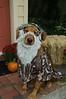 LR-Fetch Halloween-3974