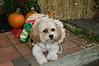 LR-Fetch Halloween-3983