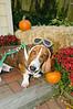 LR-Fetch Halloween-3888