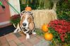 LR-Fetch Halloween-3891