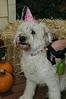 LR-Fetch Halloween-3930