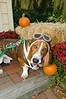 LR-Fetch Halloween-3889