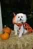 LR-Fetch Halloween-3942