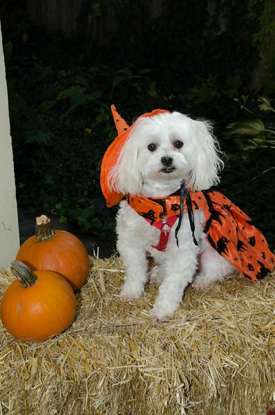 LR-Fetch Halloween-3941