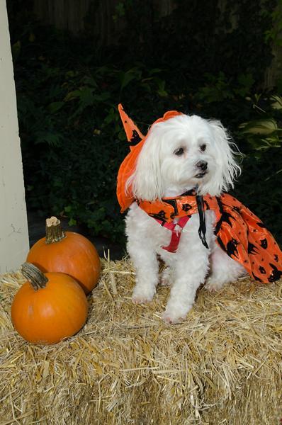 LR-Fetch Halloween-3943