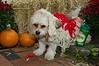 LR-Fetch Halloween-3985