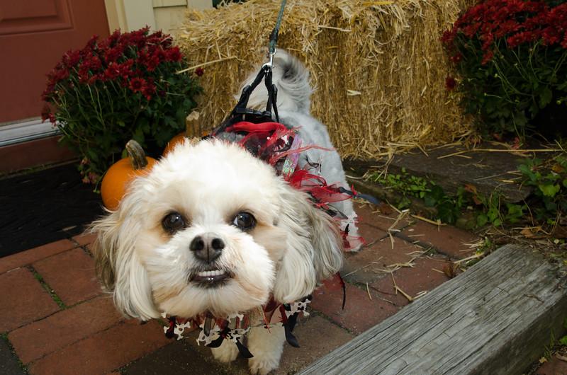 LR-Fetch Halloween-3921