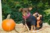 LR-Fetch Halloween-3895