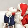 Fetch Santa13-8130