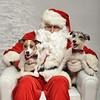 Fetch Santa13-8047