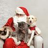 Fetch Santa13-8178