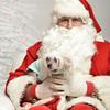 Fetch Santa13-8118