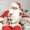 Fetch Santa13-8041
