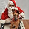 Fetch Santa13-7963