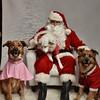 Fetch Santa13-8285