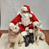 Fetch Santa13-7980
