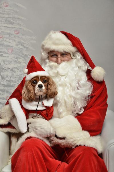 Fetch Santa13-8241