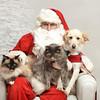 Fetch Santa13-8179