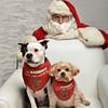 Fetch Santa13-8265