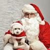 Fetch Santa13-8212