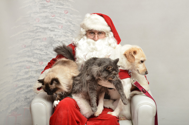 Fetch Santa13-8171