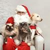 Fetch Santa13-8177