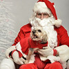 Fetch Santa13-7952