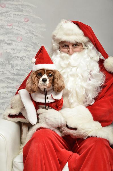 Fetch Santa13-8238
