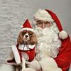 Fetch Santa13-8243