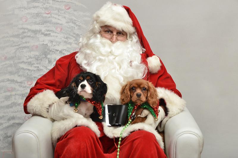 Fetch Santa13-8233
