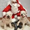 Fetch Santa13-7973