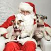 Fetch Santa13-8037