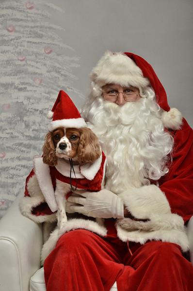 Fetch Santa13-8251